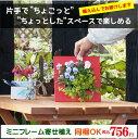 【植え込んでお届け企画】春まで楽しめるビオラを植え込んだミニフレーム寄せ植え!