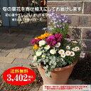【送料無料】季節の草花をイタリア製テラコッタに寄せ植えにしてお届け!秋の華やか寄せ植え