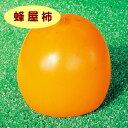 【カキノキ属】渋柿 蜂屋柿(2年生接ぎ木苗) 4号LLポット