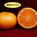 【ミカン属】柑橘 西南のひかり(二年生接木苗)4号LLポット