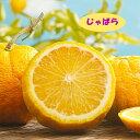 【ミカン属】柑橘 じゃばら 4号LLポット