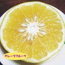 【ミカン属】グレープフルーツ(二年生接木苗)4号LLポット