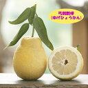 【その他柑橘系ミカン属】弓削瓢柑(ゆげひょうかん)(接木苗)4号LLポット