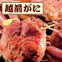 ★越前ずわいがに A約650g〜750g【かに】【カニ】【蟹...