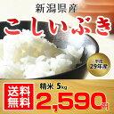 【送料無料】平成29年 新潟県産 こしいぶき 5kg【お中元...