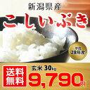 【送料無料】【平成28年産】新潟産 こしいぶき 玄米 30kg 白米にもできます!【お中元 ・お歳暮にも!】