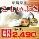 【送料無料】新潟県産 こしいぶき 5kg(精米)【平成30年度産】