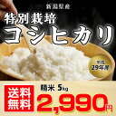 【送料無料】平成29年〔特別栽培・減農薬〕新潟県産 コシヒカ...