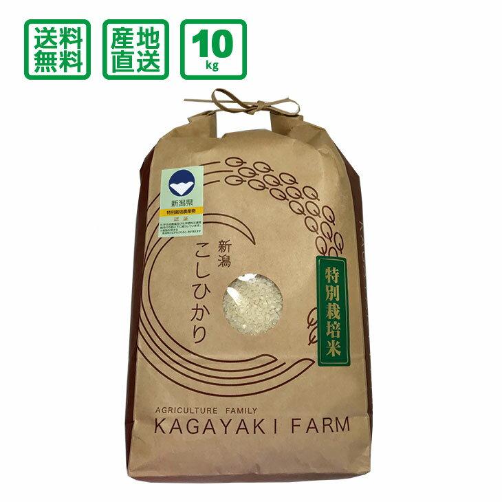 【送料無料(一部地域除く)】新潟県産 特別栽培コシヒカリ 10kg【平成30年度産】