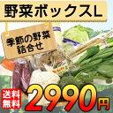 【送料無料】 産地直送 野菜セット Lサイズ【お歳暮・お中元にもどうぞ!】