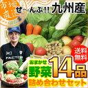【送料無料】鹿児島からクール便でお届け「九州産 /14品 野菜セット詰め合わせ」【クール便】
