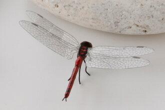 곤충 모형 あかとんぼ (대략)는 7 ×에서 4.5 × 높이 1.5 cm
