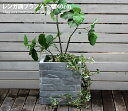 レンガ調プランター プランター 花壇 レンガ調 オシャレ 鉢植え ガーデン GRIS TERRE