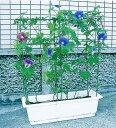 プランター栽培用支柱としてご利用いただけます。第一ビニール のびーる支柱 花のアーケード[プ...