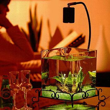 アクアリウムセット 「レガーロ」 流木 【アクアリウム 水槽セット メダカ 水槽 おしゃれ 水草 石 贈り物 プレゼント ライト付き 癒し かわいい 熱帯魚】【おしゃれ おすすめ】 [CB99]の写真