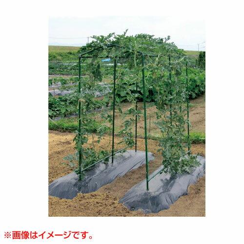 第一ビニール菜園つる棚セットTDS-1880cm×180cm家庭菜園キュウリゴーヤエンドウ小玉スイカ