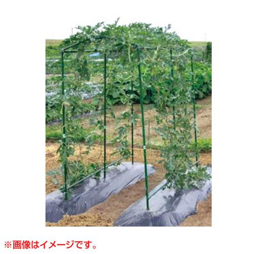 第一ビニール空中栽培つる棚セットダークグリーンTDS-18-H[カラー:ダークグリーン]家庭菜園キュ