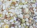■メール便可(1袋まで)■ミックスシェル【約1.5〜4.5cm/500g】貝 貝殻 シェル ブライダル ウェルカムボード ハンドメイド フォトフレーム アクセサリー