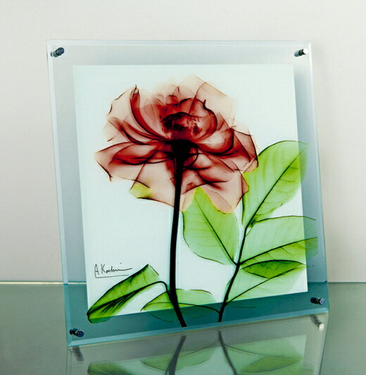 XRayガラスアート(レントゲンアート)・ローズ(壁掛用)(Lサイズ)