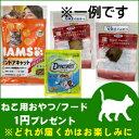 ホームライフで買える「【3500円(税込)以上で送料無料】【お一人様1個限定】猫用おやつORフード1円プレゼント」の画像です。価格は1円になります。