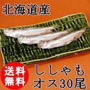 (送料無料) 北海道産 ししゃも オス 30尾 特大 柳葉魚 /クール便