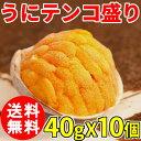 (送料無料) うにテンコ盛り 約40g 10個セット/焼うに/貝付/ウニ/雲丹/貝焼き/うに/蒸しうに/ムシウニ/クール便