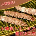 春シャコ 小樽産 オス 殻付20本 蝦蛄 しゃこ /クール便