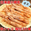 秋シャコ 小樽産 オス 殻付20本 蝦蛄 しゃこ 北海道 海産物 お取り寄せ 海鮮 貰って嬉しい 贈答 贈物 海鮮小樽 ご飯 お酒 ビール 無添加 /クール便