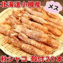 秋シャコ 小樽産 メス 殻付20本 蝦蛄 しゃこ 北海道 海産物 お取り寄せ 海鮮 貰って嬉しい 贈答 贈物 海鮮小樽 ご飯 お酒 ビール 無添加 /クール便