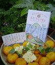 蒲郡蜜柑洋菓子(がまごおりみかんけえき)