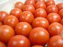 高知県産 徳谷トマト 4kg 生産者52