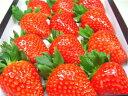 奈良県産いちご 古都華(ことか)大粒12入り 2010年に市場に投入された奈良県期待のいちごの新品種!高糖度で甘さ抜群!しっかりとした果肉は食味の良さが抜群!! バレンタインのギフトにおすすめ  【RCP】