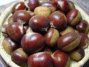 熊本県産 利平栗 2kg くりの中で最も美味しいといわれる最高級品種!クリの甘みと旨
