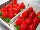 【送料無料】福岡県産イチゴ あまおう  九州を代表するブランド苺!とよのかに次ぐ期待の後継品種  *