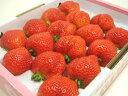 入手困難!大阪市場にしか入荷しない幻の苺・ももいちご!徳島県佐那河内村産ももいちご16粒 希少価値あり!爽やかな甘さと果汁タップリのジューシー感が大人気!香りも楽しめる数少ないイチゴ