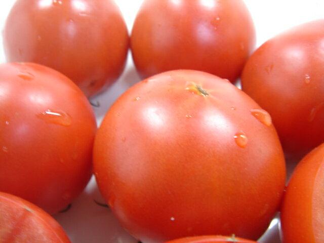 徳谷トマト 画像2