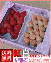福岡産紅白いちごあまおう&淡雪2パック送料無料¥4,980