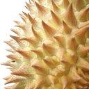フルーツの王様ベトナム産ドリアン3玉