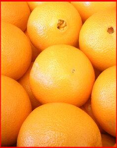 アメリカ ネーブル オレンジ
