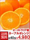 オーストラリア産ネーブルオレンジ大40玉