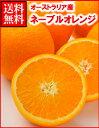 オーストラリア産ネーブルオレンジ大30玉...