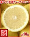 暑い夏に体を潤すジューシーな果汁!南アフリカ産グレープフルーツ白大10玉送料無料\2,980