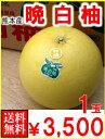 熊本産 晩白柚(ばんぺいゆ)1玉