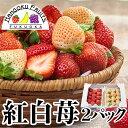 全国お取り寄せグルメ福岡食品全体No.13