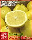 カリフォルニア産メロゴールド18玉14kg箱送料無料¥11,000