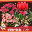大雪のためあす楽お休み中 季節の鉢花ギフト 当店人気の鉢花ギフトで季節感満点の贈り物を♪