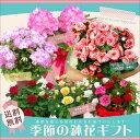 季節の鉢花ギフト 当店人気の鉢花ギフトで季節感満点の贈り物を♪【敬老の日・母の日・誕生日ギフト・結婚