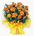 珍しい花色で人気上昇中0330アップ祭2母の日オレンジカーネーション鉢植