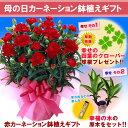 【母の日ギフト】赤カーネーション鉢植えギフト