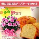 【送料無料】母の日プレンゼントにおすすめ【fgp48_02】【母の日ギフト】ピンクカーネーション4号鉢とチーズケーキ